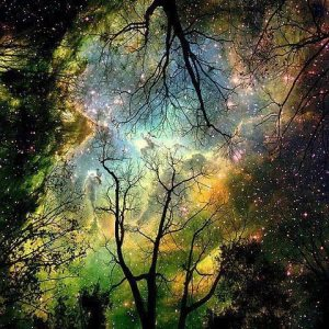 cosmic-garden
