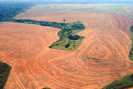 Amazonian rainforest being displaced for soy farms