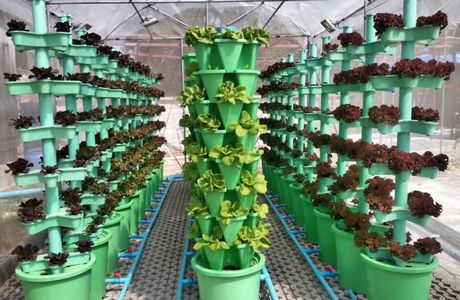 Vertical NFT system, this can produce up to a hundred times more food than traditional agriculture - therefore (if done well) can help to decrease environmental impact by large scale outdoor farming. Credit: Thadvance