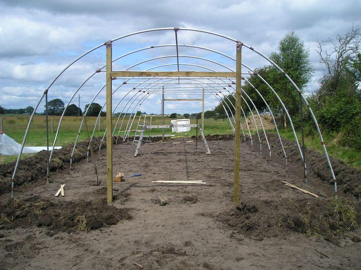 ireland greenhouse 5