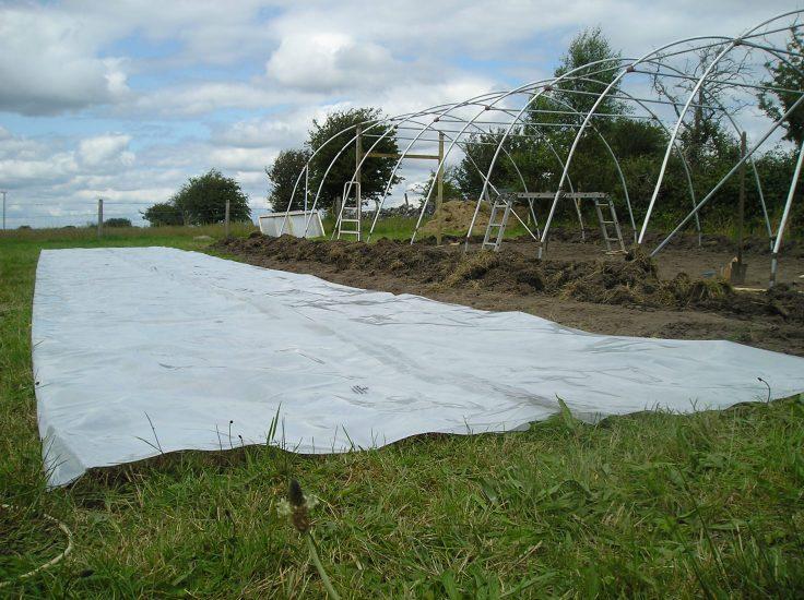 ireland greenhouse 7