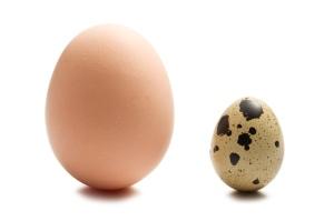 chicken egg quail egg