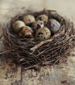 coturnix egg nest